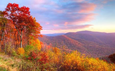 Autumn in VA
