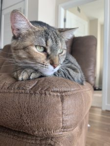 Photo of a cat sitting on a couch.