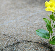 Image of a yellow flower growing out of a crack in concrete.