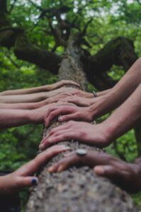 Photo of several hands holding a tree trunk by Shane Rounce on Unsplash.