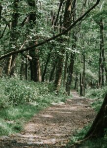 Photo of a dirt trail amid green foliage and trees in Shenandoah National Forest. Photo by Tatiana Rodriguez on Unsplash.